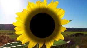 """Immer wieder - jedes Jahr im Sommer - dann ist es da: Das angeblich """"Sommerloch"""". (Bild: L. A. Fischinger / WikiCommons)"""