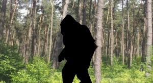 Rätsel und Sensationen um den Bigfoot - Meldungen gibt es immer wieder (Bild: L. A. Fischinger)