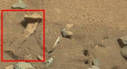 Zeigt das Bild einen Knochen auf dem Mars? (Bild: NASA/JPL-Caltech/MSSS)