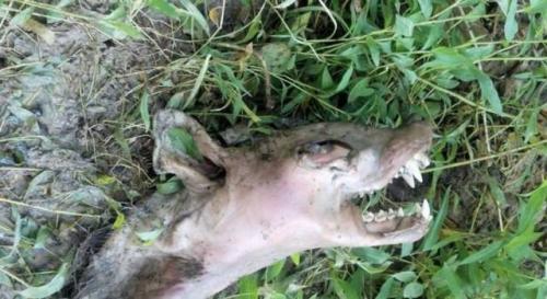 Dieser seltsame Tierkadaver wurde in Kentucky gefunden (Bild: Ch. Neal / Facebook-Page)