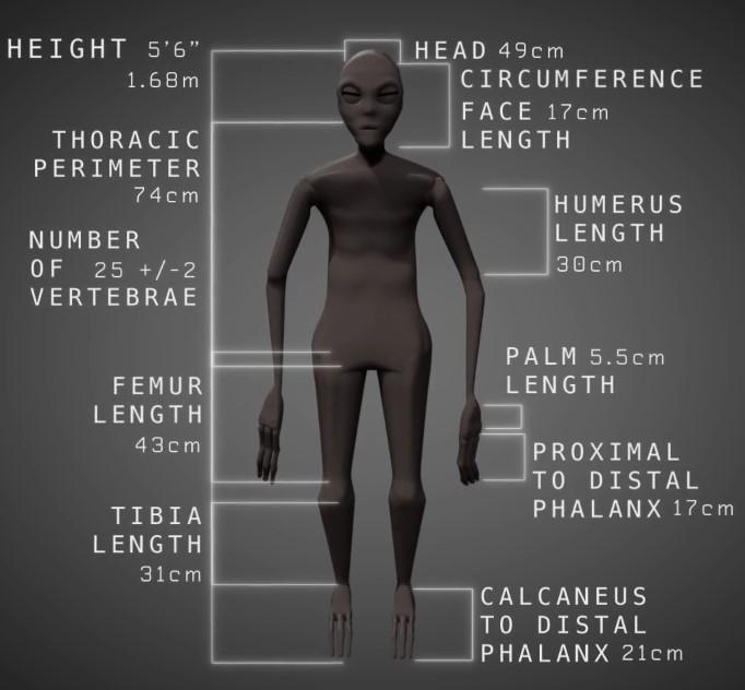 Die Alien-Leichen von Peru : So soll die Mumie aufgerichtet aussehen (Bilder: Gaia.com / Screenshots YouTube)