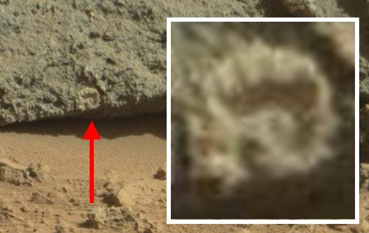 """Ausschnitt & Vergrößerung des """"Mars-Fossil"""" (Bild: NASA/JPL-Caltech/MSSS )"""