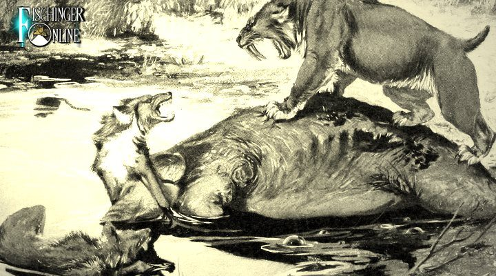 Der Kadaver der rätselhaften Bestie von Montana – ist nur ein Wolf