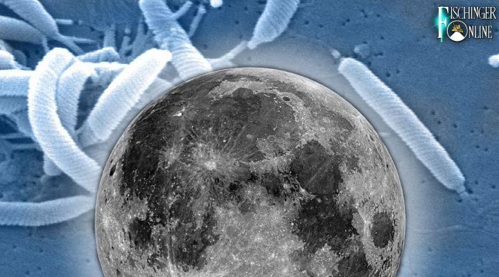 Killer-Bakterien vom Mond: Die Ängste der NASA bei der Mondlandung