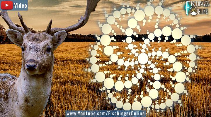 VIDEO: Paarungswillige Rehböcke sind die Ursache von Kornkreisen - Neue alter Erklärung in den Medien (Bilder: gemeinfrei / Montage: Fischinger-Online)