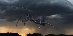 """Nahe Sao Paolo in Brasilien ging ein """"Regen"""" von hunderten Spinnen nieder (Bilder: gemeinfrei/PixaBay / Montage: Fischinger-Online)"""