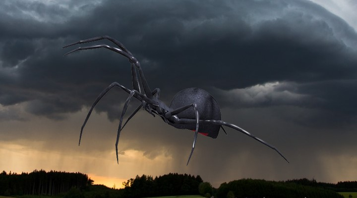 """Nahe Sao Paulo in Brasilien ging ein """"Regen"""" von hunderten Spinnen nieder (Bilder: gemeinfrei/PixaBay / Montage: Fischinger-Online)"""