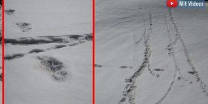 """Spuren im Schnee: Die indische Armee veröffentlicht """"Beweise"""" für den Yeti im Himalaya (Bilder: ADG PI / Indian Army/twitter)"""