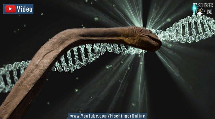 VIDEO: Forscher auf der Suche nach Nessie-DNA in Loch Ness - ist das Monster nur ein riesiger Aal? (Bilder: PixaBay/gemeinfrei / Montage: Fischinger-Online)