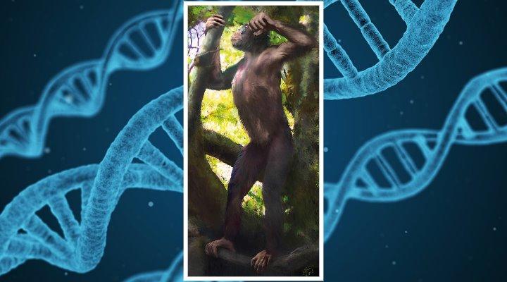 """""""Sternstunde der Paläoanthropologie und ein Paradigmenwechsel"""": Forscher entdecken ein """"Missing Link"""" zwischen Mensch und Affe in Bayern (Bilder: Nature & PixaBay/gemeinfrei)"""