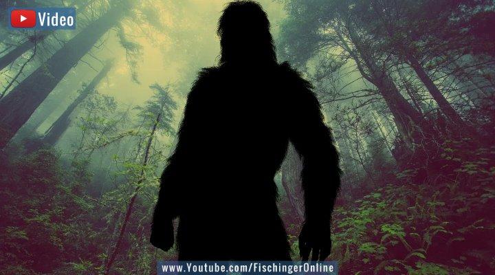 """VIDEO: Die """"Expedition Bigfoot"""" in den USA - Fand sie den """"vielleicht besten Beweis überhaupt"""" für den Bigfoot? (Bilder: PixaBay/gemeinfrei / Montage: Fischinger-Online)"""
