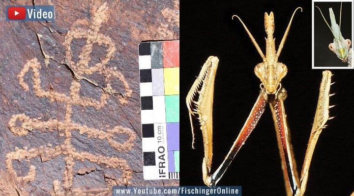 """VIDEO: Forscher rätseln über ein uraltes Felsbild im Iran: Ein """"Insektenmensch""""? (Bilder: M. Kolnegari/Journal of Orthoptera Research)"""