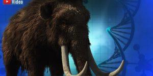 Spektakuläre Entdeckung: Millionen Jahre alte Mammut-DNA (Bilder: PixaBay/gemeinfrei / Montage: Fischinger-Online)