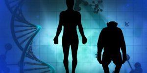 Mischwesen aus Mensch und Affe - Genetiker erschaffen Chimäre-Embryos: Alles schon mal dagewesen (Bilder: gemeinfrei / Montage: Fischinger-Online)