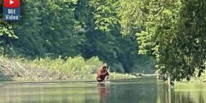 Durchquert hier ein Sasquatch einen Fluss? Neues Bigfoot-Video aufgetaucht (Bild: YouTube-Screenshot)