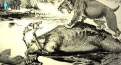 """DNA-Analyse bestätigt: Der Kadaver der unheimlichen """"Bestie von Montana"""" ist nur ein Wolf - aber ..."""
