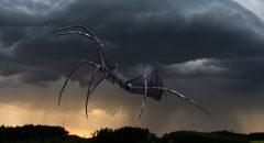 """Nahe São Paulo in Brasilien """"regnete"""" es hunderte Spinnen vom Himmel - was war da wirklich los?"""