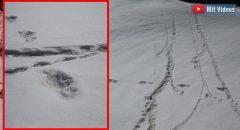 """Spuren im Schnee: Die indische Armee veröffentlicht """"Beweise für den Yeti im Himalaya"""" (+ Videos)"""