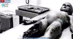 UFO-Absturz von Roswell: Alien-Autopsie-Video von 1947 soll doch echt sein ... +++ YouTube-Video +++